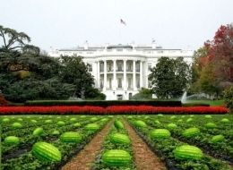 The White House photo with watermelons on the lawn