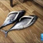 shoes-fish-flpflps