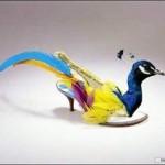 shoes-quail