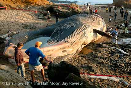 Prehistoric fish washed up on shore - photo#25