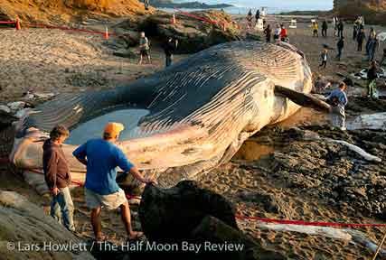 Prehistoric fish washed up on shore - photo#25