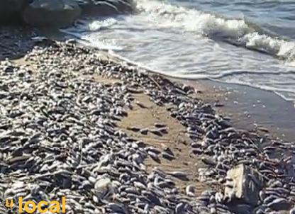 online things get weirder tons of dead fish wash ashore in brazil