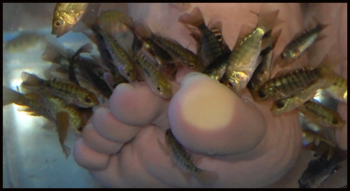 fish-pedicure