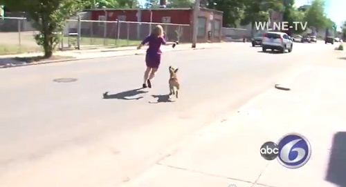 ABC reporter Abbey Niezgoda being chased down the street by Lawrence's pit bull.