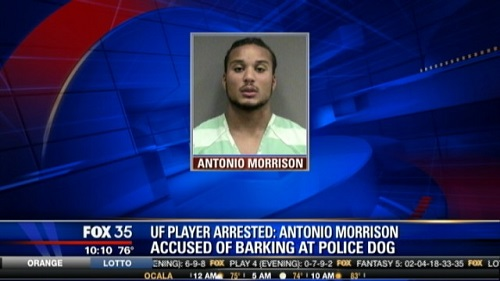 football player arrest bark at dog