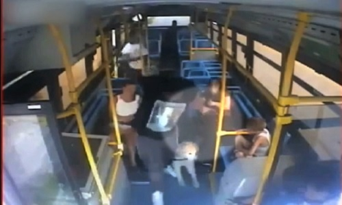Unidentified idiot attempts to steal woman's service dog off of a Toledo, Ohio, city bus, Monday, July 22, 2013.