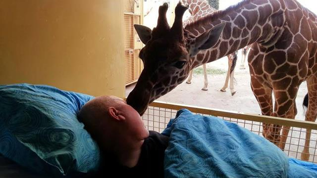 Giraffe kisses zoo worker