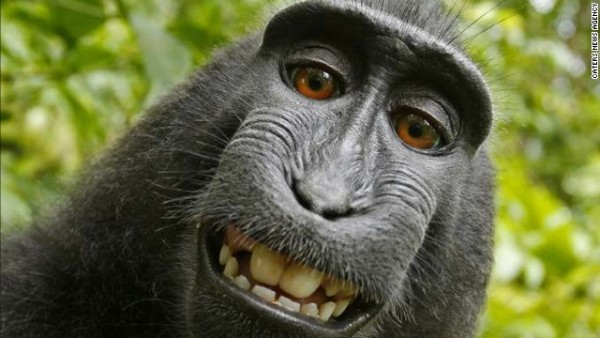 This is an authentic monkey selfie!