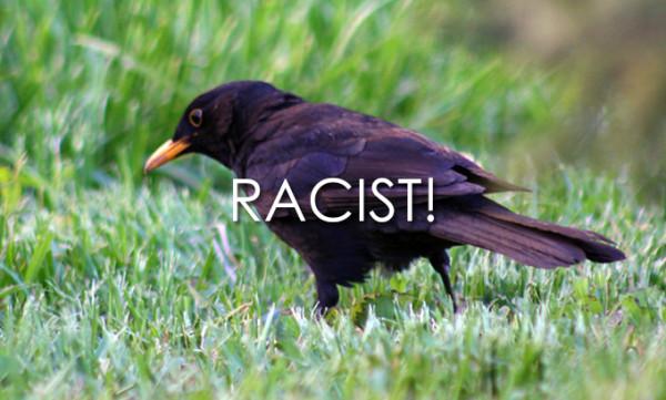 Bird, racist
