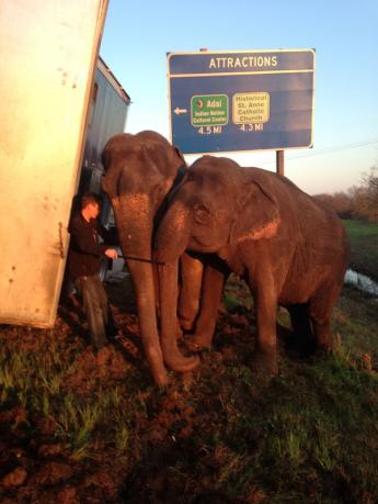 Two elephants support a stranded eighteen-wheel truck in danger of tipping over in Natchitoches Parish, Louisiana in this handout photo