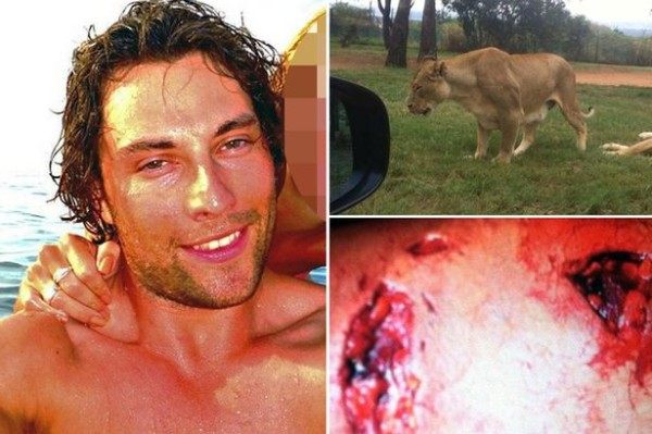That's Brenden on the left, the lion on the upper right, and his mauled leg on the bottom right. Yeesh!