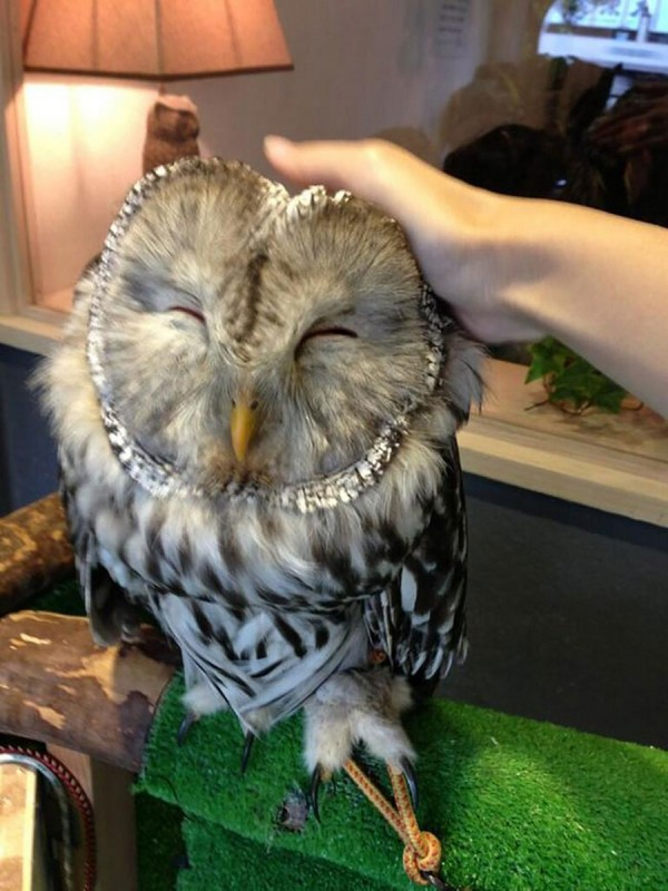 OWL being petted