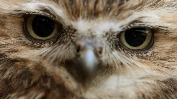 OWL, close up