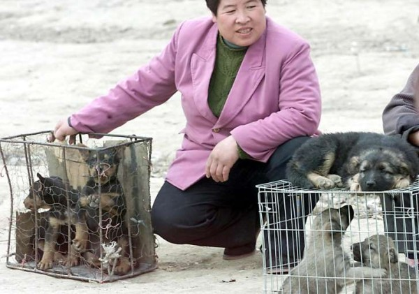 chinese woman with rescue dogs2