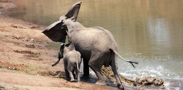 Elephant and croc 5