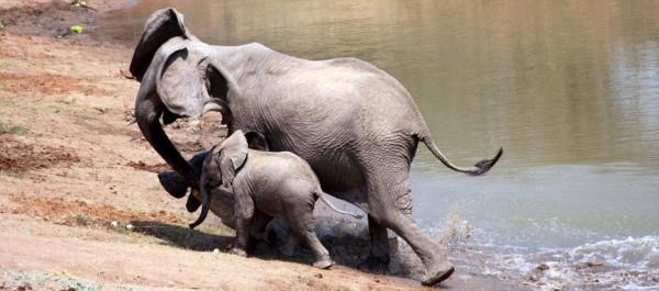 Elephant and croc 6