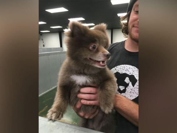 Bear dog 2
