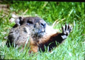 Groundhog wave