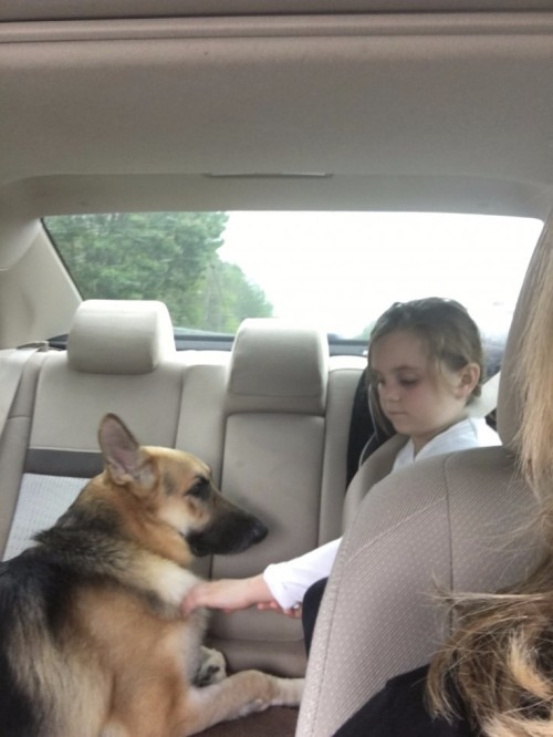 dog-saves-girl-rattlesnake