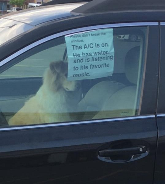 Dog in car with note on window