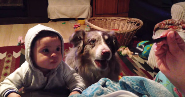 dog-says-mama-baby-cant-fb3