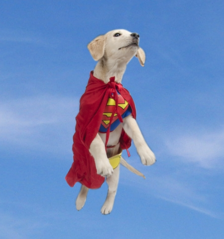 dog superhero