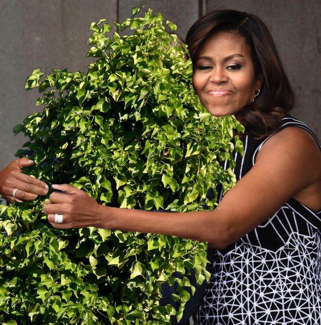 bush-as-a-bush
