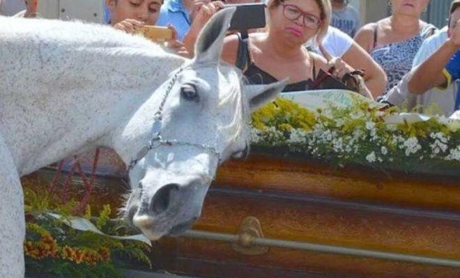 brazil-grieving-horse-660x400