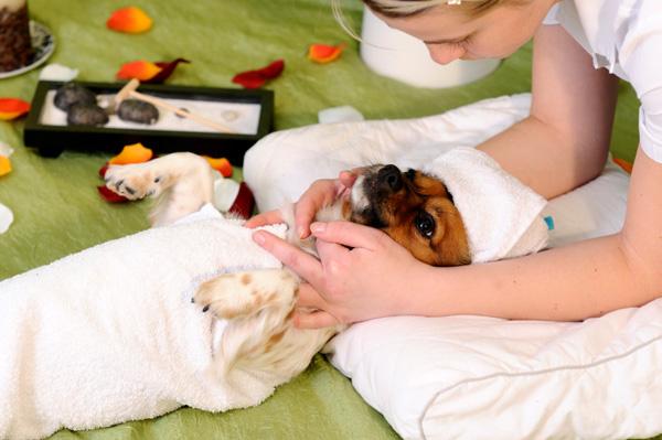 dog-getting-massage