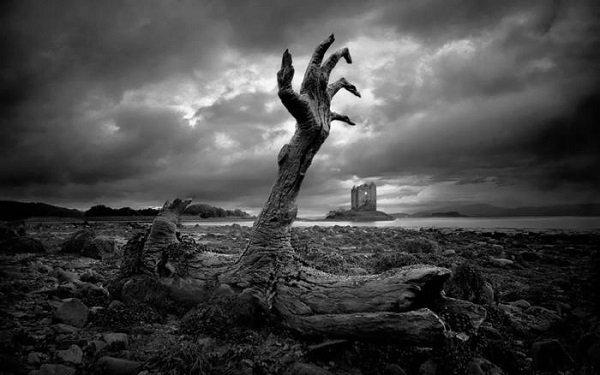 Funerals, tree trunk
