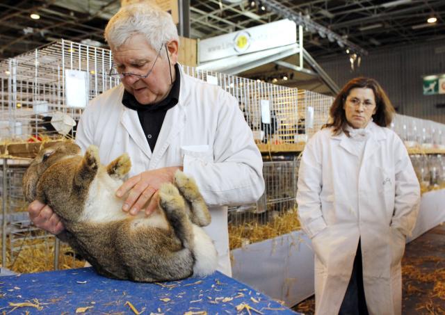 Bunny, Simon, vet check