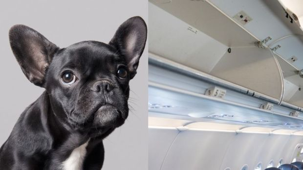 Straight No Chaser >> Little Dog Found Dead in Overhead Bin is Latest PR Nightmare for United Airlines (Watch)