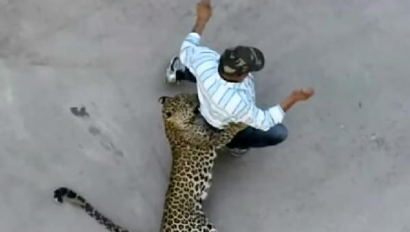 leopard attacking man